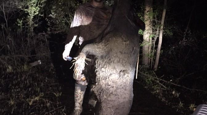 Night pig hunt