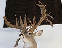 South Texas Trophy Hunts