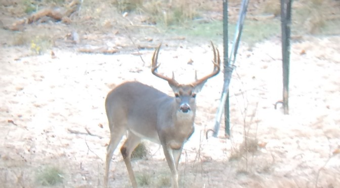Deer Hunting Report December 2016