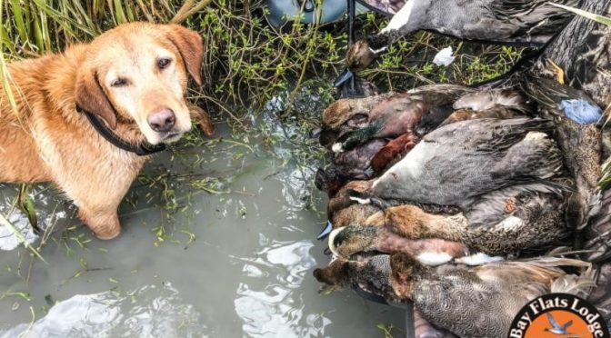Duck Hunting in Seadrift, Texas
