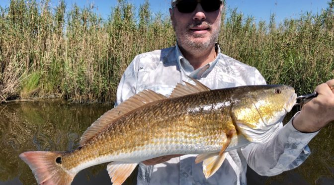 Mike Coker Redfish