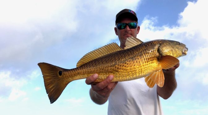 Seadrift Redfish Report