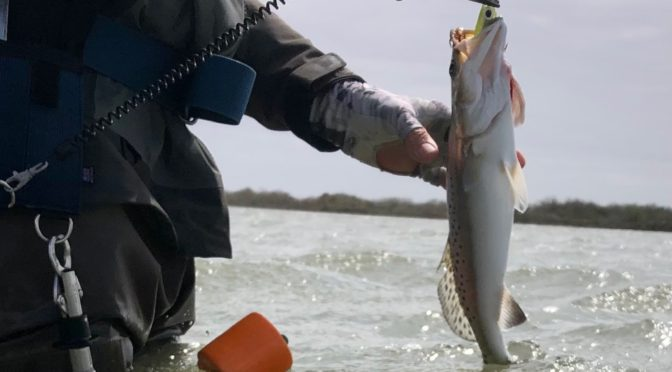 Seadrift Fishing Report