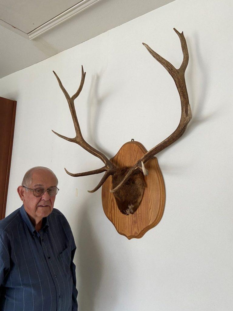 Clarence Scheel Royal Bull Elk